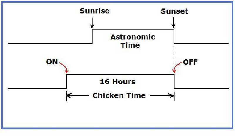 Need lighting control solution-chicken-time.jpg