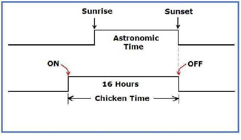 Need lighting control solution-chicken-time.jpg