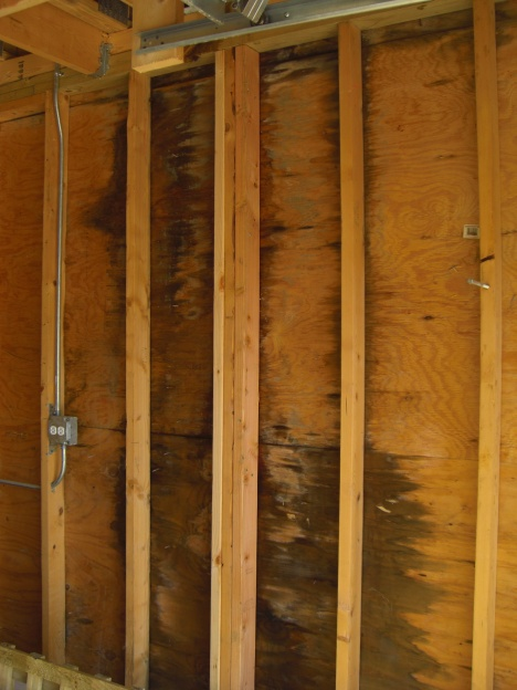 Mold in detached garage-cimg2123.jpg