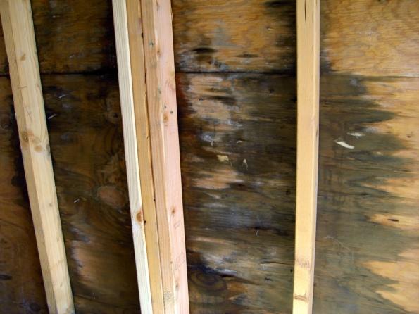 Mold in detached garage-cimg2124.jpg
