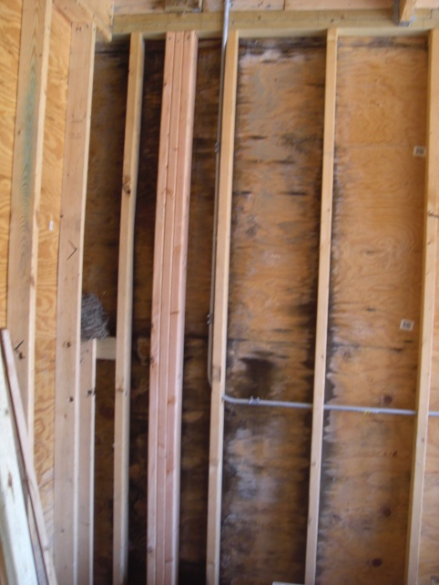 Mold in detached garage-cimg2125.jpg