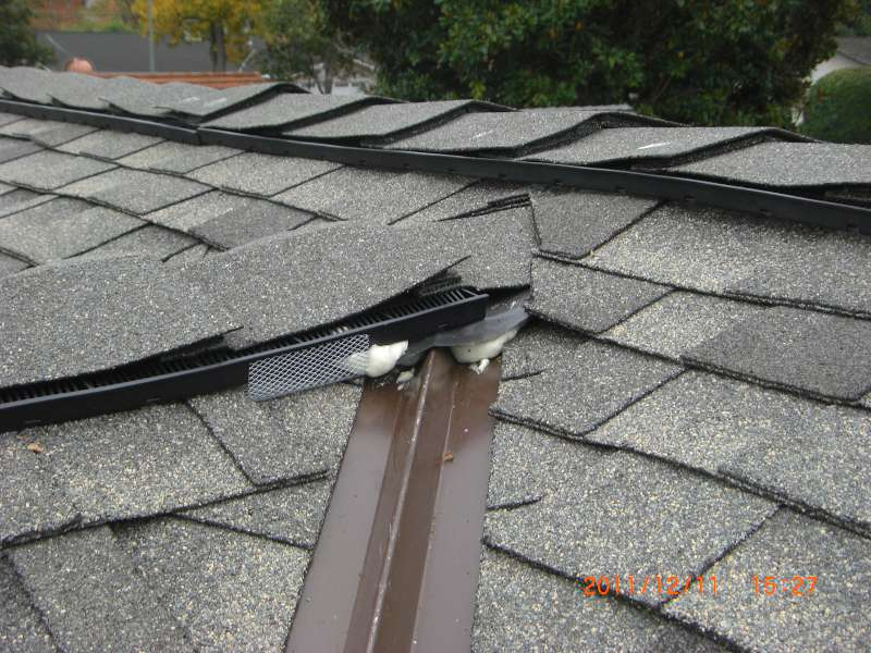 My New Roof Seems To Not Be Rodent-proof - Roofing/Siding