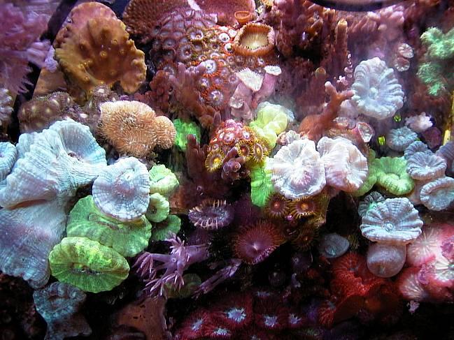 Live coral vases as a new type of aquarium decor-closeup1.jpg
