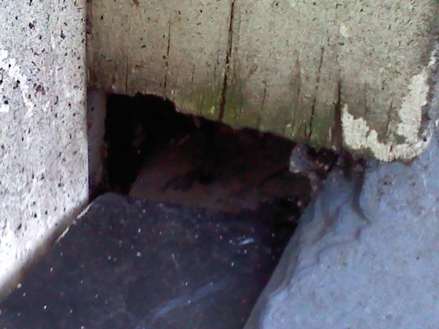 Roof leak nightmare..... it won't stop-corner-board-repair-2-.jpg