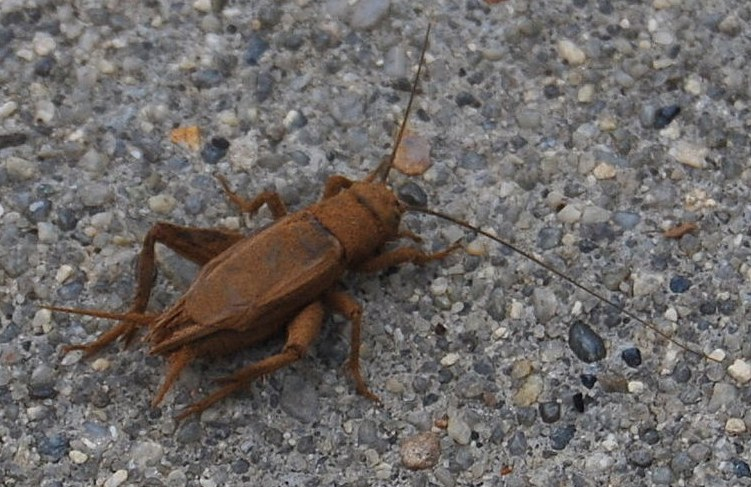 Problem with Crickets in my crawl-cr0.jpg