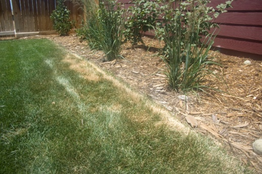 Large areas of grass dying-deadgrass_02.jpg
