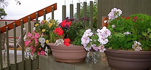Gulf Island Building.-deck-flowers.jpg