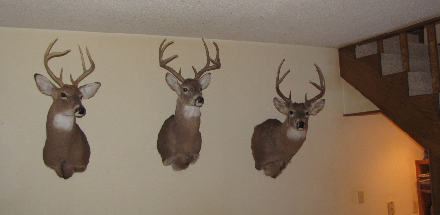 How to decorate huge dining room/living room wall-deer-mounts-basement-10-14-12.jpg