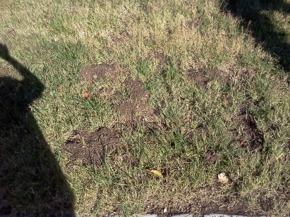 What can cause dirt dug up in front lawn?-dirt.jpg