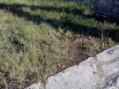 What can cause dirt dug up in front lawn?-dirt2.jpg