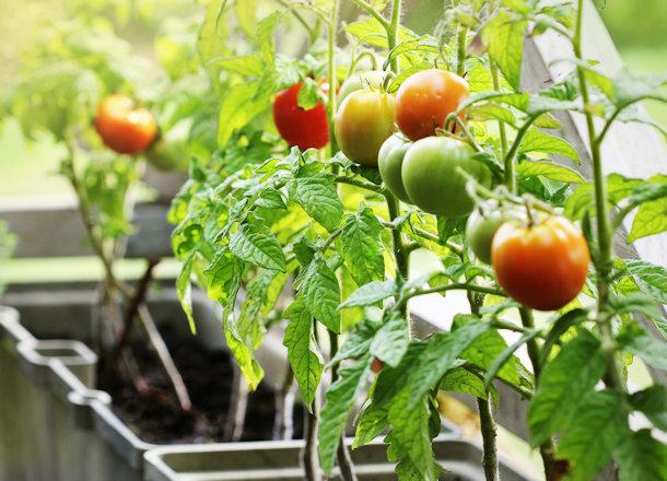 DIY Container Gardening Ideas
