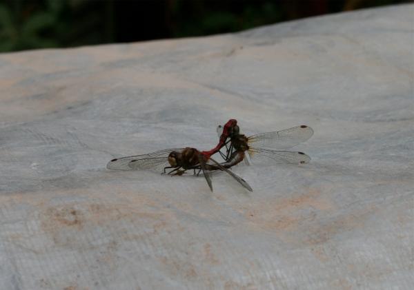 Gulf Island Building.-dragonflies.jpg