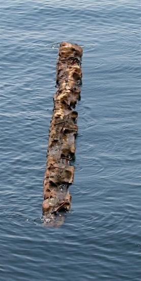 Gulf Island Building.-driftwood-3.jpg