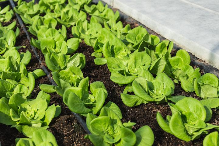 Installing Drip Irrigation for Your Vegetable Garden