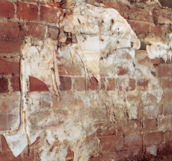 Name:  dryrot1sm.jpg