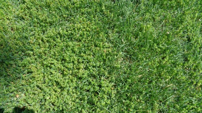 Help identify weed please-dsc00299.jpg