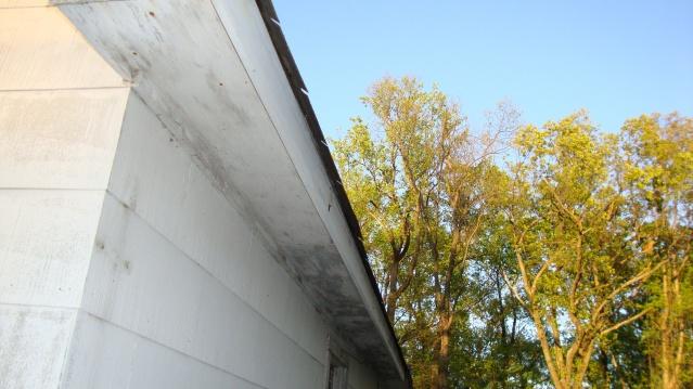 need advise with wood rot before painting-dsc00856.jpg
