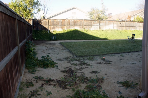 Ideas needed for backyard...-dsc00889.jpg