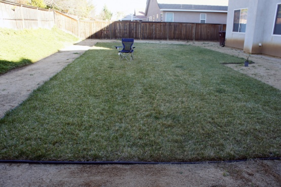 Ideas needed for backyard...-dsc00890.jpg