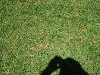 New SOD going brown? Pics Included.-dsc01867.jpg