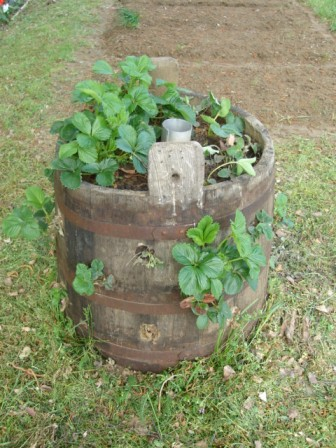 my outdoor toilet-dsc03160.jpg