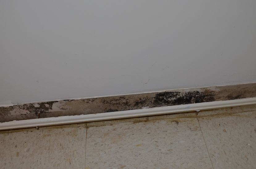 Is this mold? Is it a problem?-dsc_0381-copy.jpg