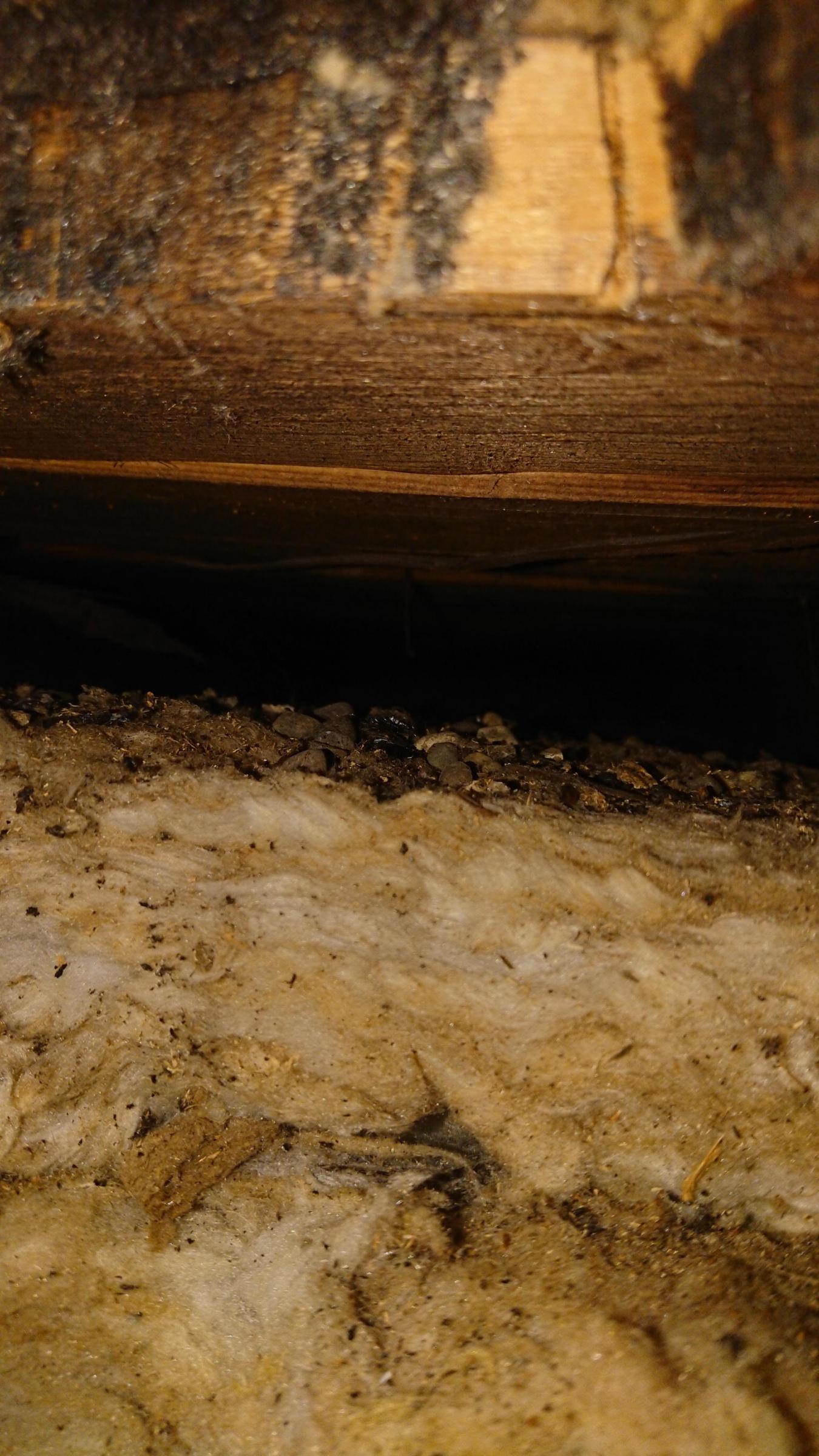foam board, interior ceiling-dsc_2664_1575950324407.jpg