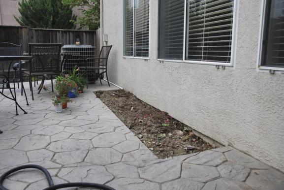 Wet planter box against house-dsc_3912.jpg