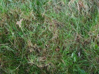 Need some serious lawn help...-dscf0001.jpg