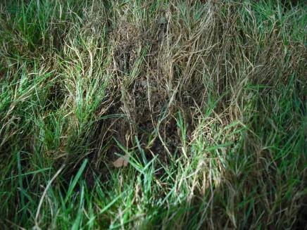 Need some serious lawn help...-dscf0002.jpg