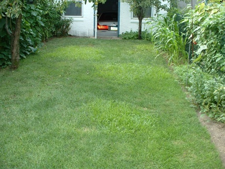 Invasive Grass Taking Over Kentucky Bluegrass