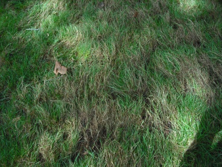 Need some serious lawn help...-dscf0004.jpg