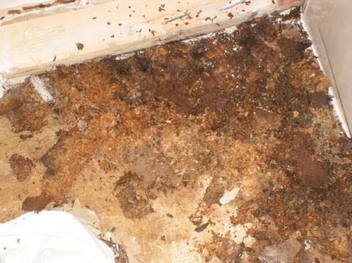 Water seeped through tiles in shower, wall ruined, need help.-dscf0998.jpg