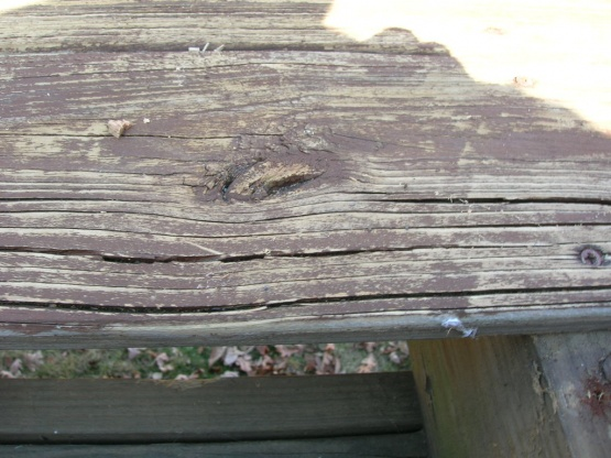 should I replaced the deck?-dscn1133.jpg