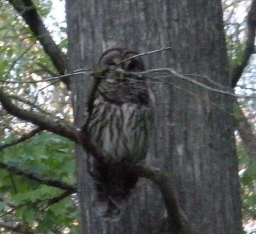 bobble head owl-dscn1516.jpg