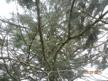 Can anyone identify these trees?-dscn8212.jpg