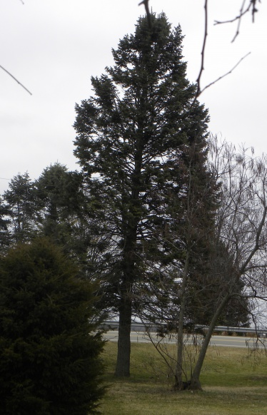 Can anyone identify these trees?-dscn8219.jpg