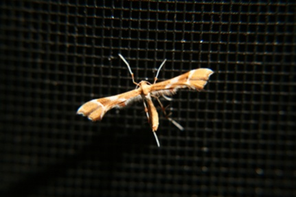 moth identification-e-sized.jpg