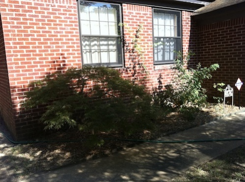 1952 Brick Traditional overhaul-exterior-rose-maple-bed.jpg