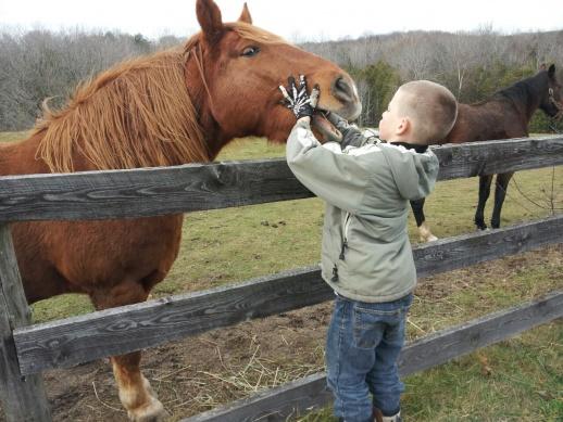 horses-f_13-1-.jpg