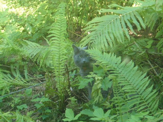 Relocation of ferns-family-memories-051.jpg