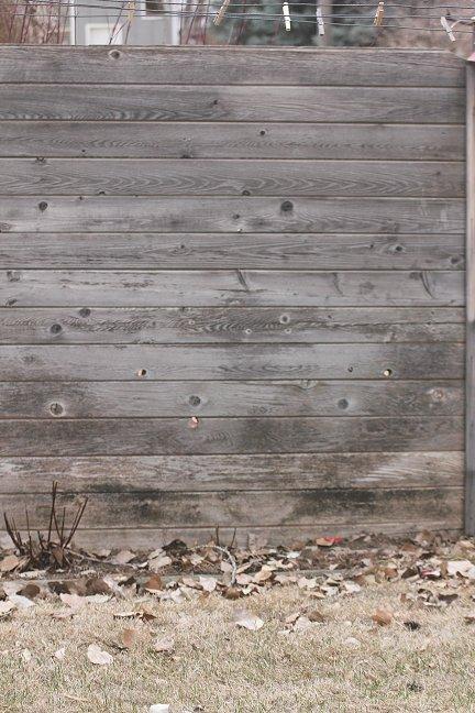 Cedar Wood Fence - Staining again-fence-01-mildew.jpg