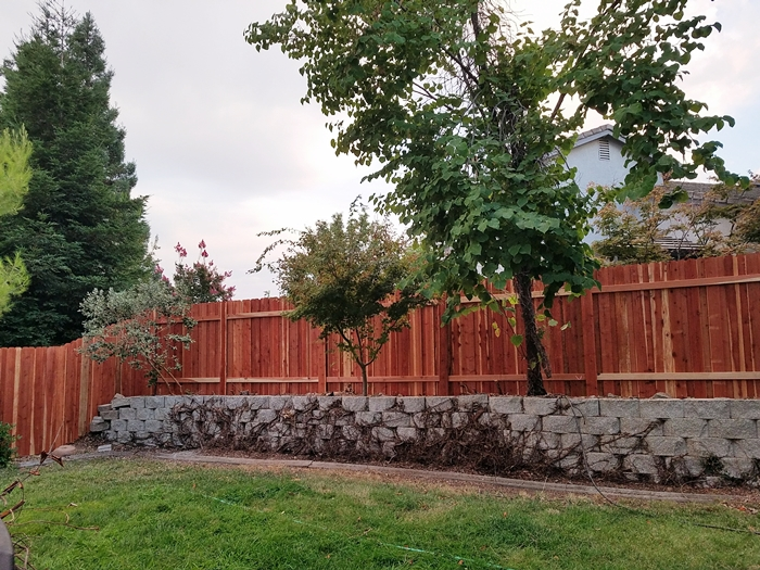 Removal of Vine on Fence-fence-new1.jpg
