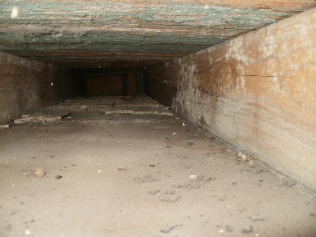 Is this floor joist cavity deteriorating?-floor-cavity-full-life.jpg