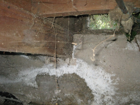 How to replace a rotten sill plate, floor, and rim joists?-floor_joist1.jpg