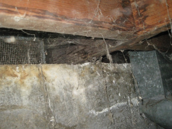 How to replace a rotten sill plate, floor, and rim joists?-floor_joist2.jpg