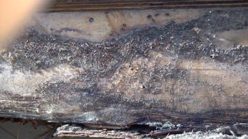 Termite damage found but no termites?-forumrunner_20111123_204325.jpg