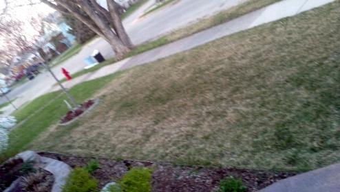 Yellow -browning grass-forumrunner_20120327_100907.jpg