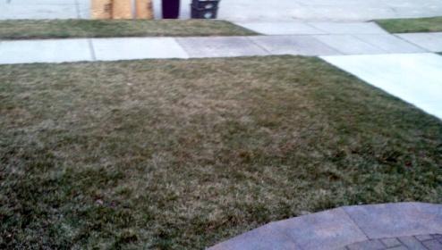 Yellow -browning grass-forumrunner_20120327_100925.jpg