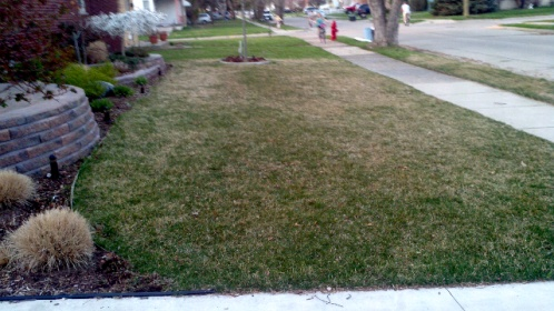 Yellow -browning grass-forumrunner_20120327_100945.jpg